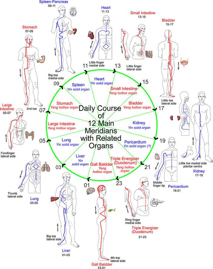 Ciclo nutrimento meridiani energetici