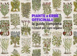 erbe e piante officinali: guida completa