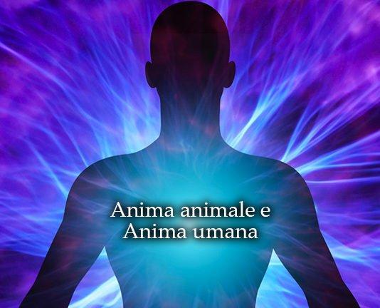 anima animale anima umana