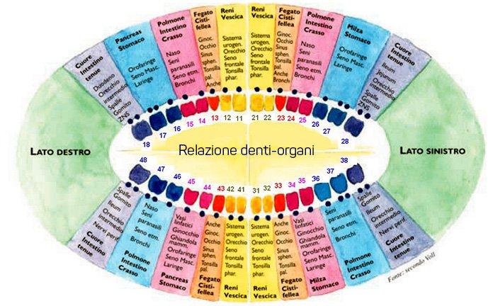 relazione denti organi