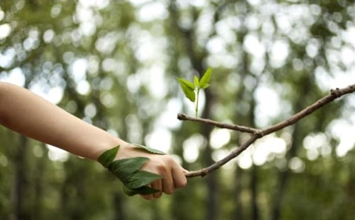 conoscere se stessi piante